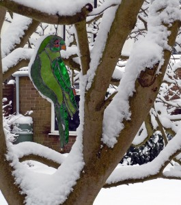 Parrot in snow